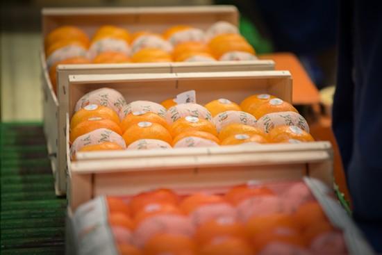 Los precios de las naranjas y las clementinas suben ante la baja producción - Masiá Ciscar