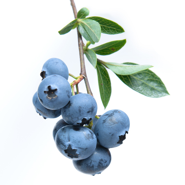 Blueberries - Masiá Ciscar
