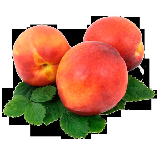 Nectarine - Masiá Ciscar