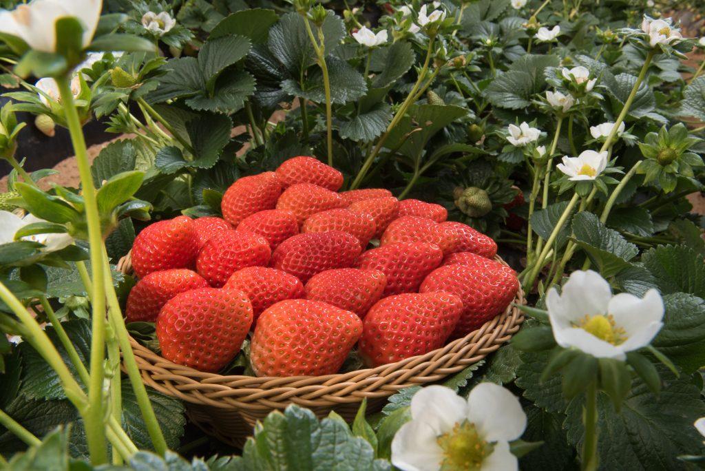 Conoce las propiedades adelgazantes de los frutos rojos - Masiá Ciscar