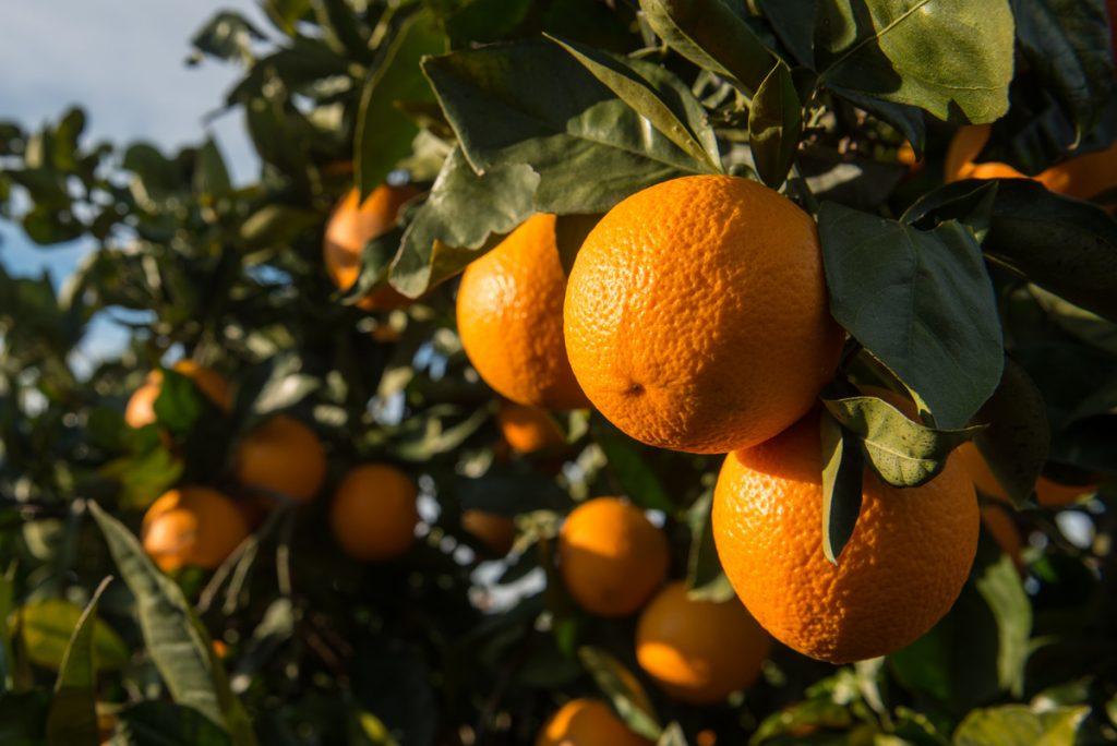 Descubre el poder de cítricos y frutos rojos contra el Covid-19 - Masiá Ciscar